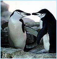 [صورة مرفقة: gay-penguins.jpg]